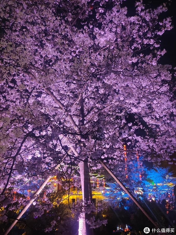 2021春天武汉赏樱之旅——行程篇