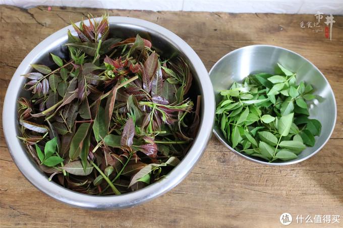 春天最后一茬香椿,学会新吃法,麻辣鲜香,吃1次就忘不了