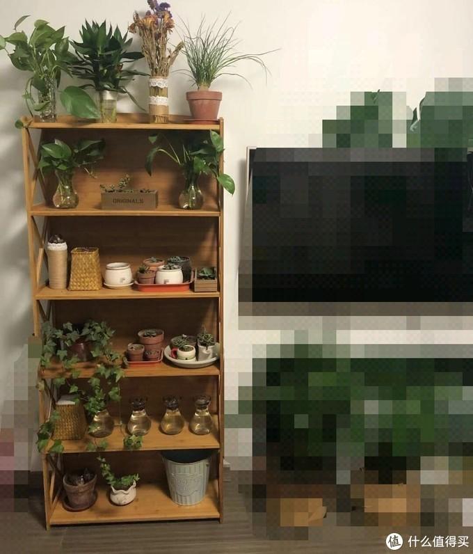 放绿植的小书架