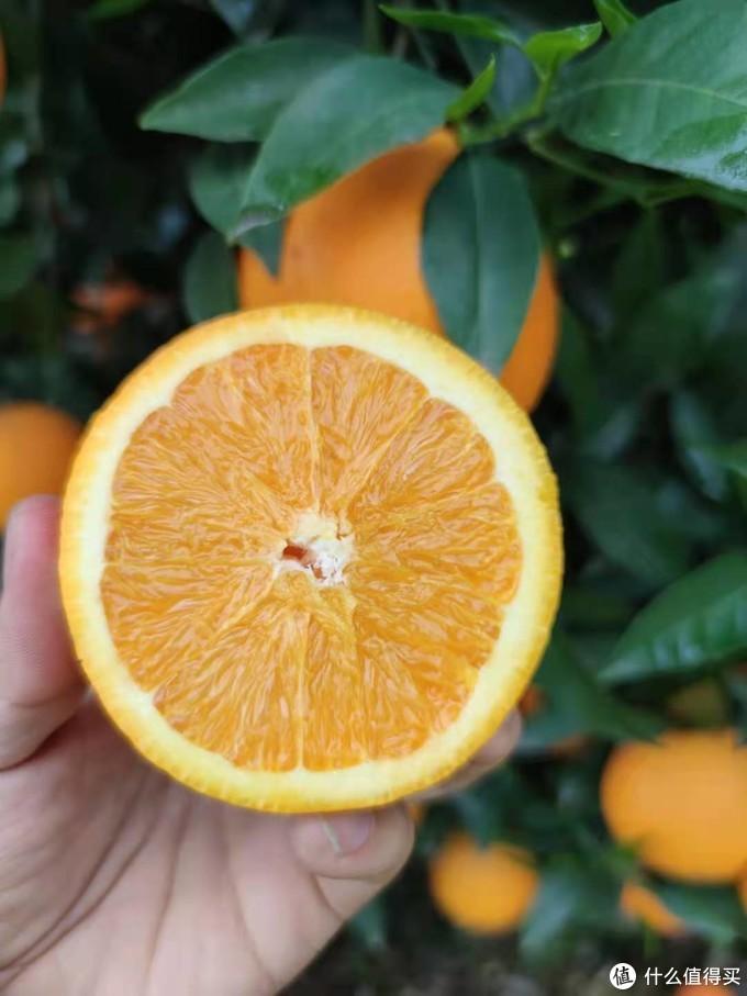 相对赣南脐橙来说,果皮相对较厚