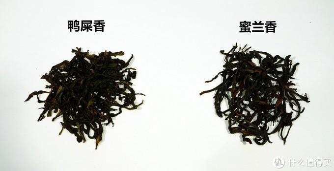 传统VS创新——普洱单枞VS凤凰单枞,单枞红茶VS滇红对比小评