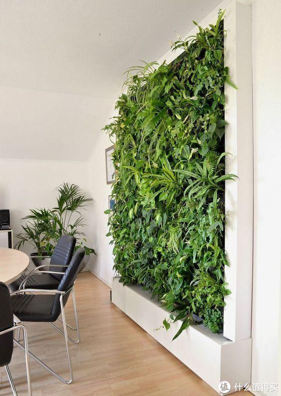 有一墙的绿植,如梦如画醉人心