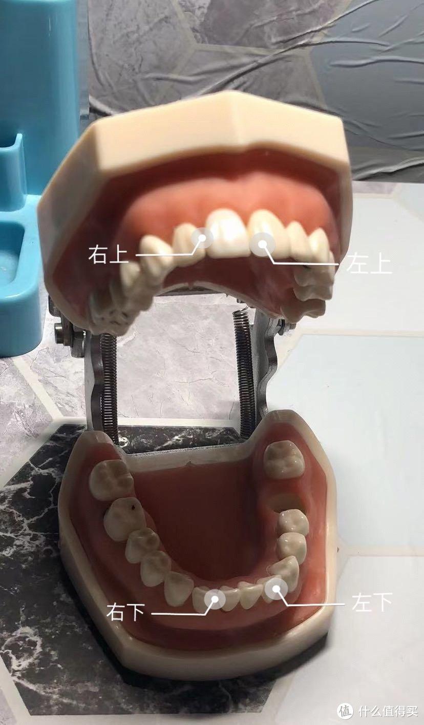 好好清洁牙齿,正确刷牙的打开方式