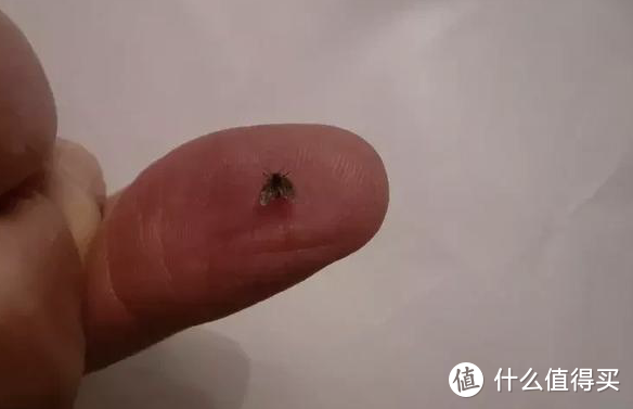 春天!家中各种虫子出没怎么办?这几样杀虫神器主妇们闭眼入!