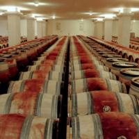 波尔多2020年期酒周开幕