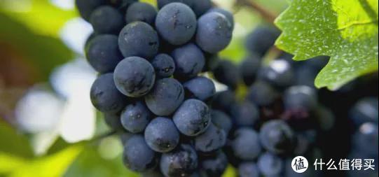 同样是AOC葡萄酒,为什么价格差距这么大?