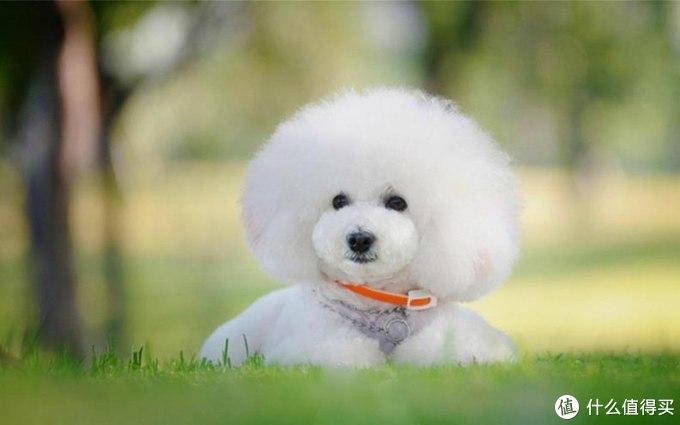 狗狗经常喝奶粉会有副作用吗?