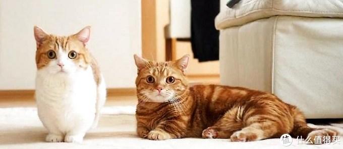 猫维生素B对猫咪有什么用?