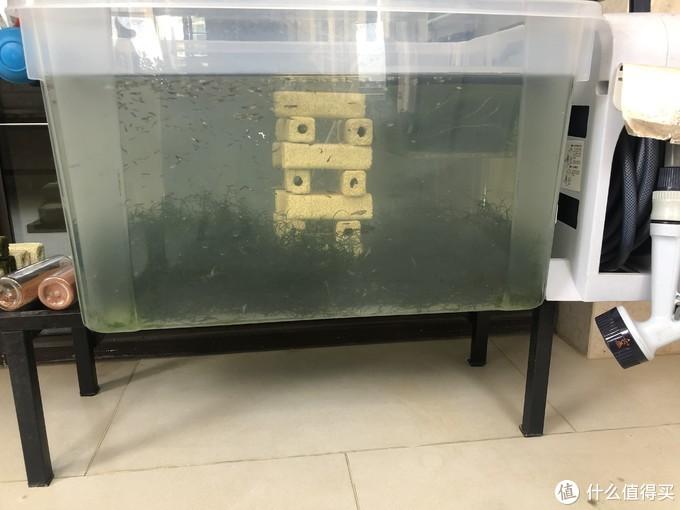 正视图:底下是平铺的莫斯,中间用多余的细菌屋搭了一个塔,里面有个气头,算是培菌+躲避+增氧。