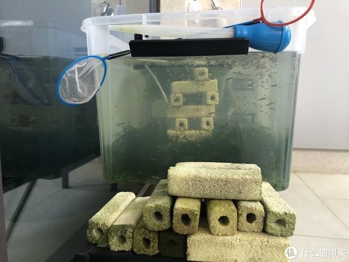 侧视图:旁边堆了一些晒着的细菌屋和工具。