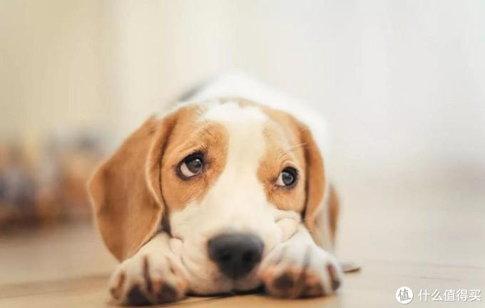 关于狗狗喝奶粉的那些事儿,你都知道吗?