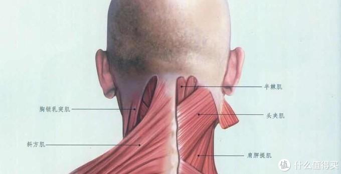 上班族必备的护颈神器,西屋颈部按摩仪