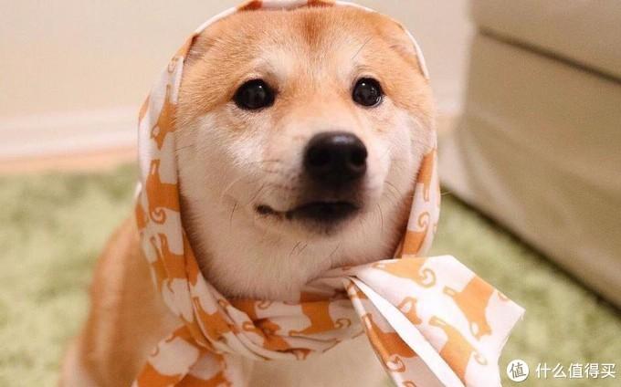 狗狗羊奶粉要怎么选?别再踩雷了哦!