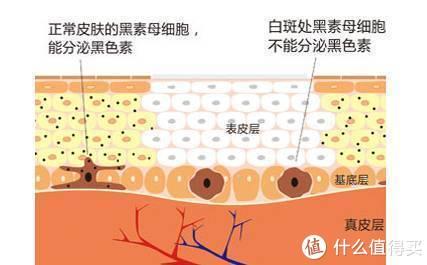 新美白亮肤原料寡肽-51 / Oligopeptide-51CG-Purilux