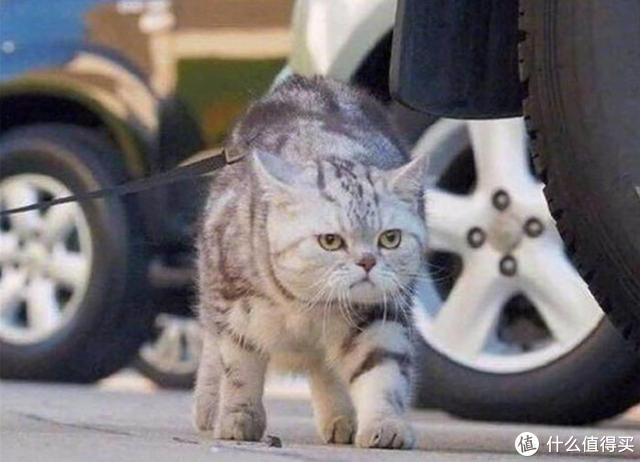 详解猫维生素的作用与功效