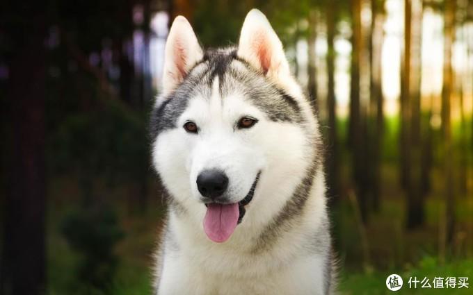 狗狗可以喝人喝的奶粉吗?喂狗狗喝奶有什么讲究吗?