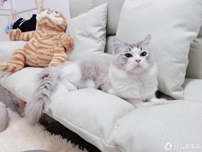 猫零食测评 2021年几款风评俱佳的猫零食大测评
