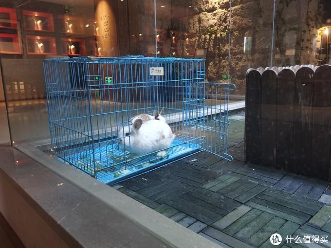动物园中有鸽子和两只可爱的兔兔,亲子游的话孩子应该会很喜欢