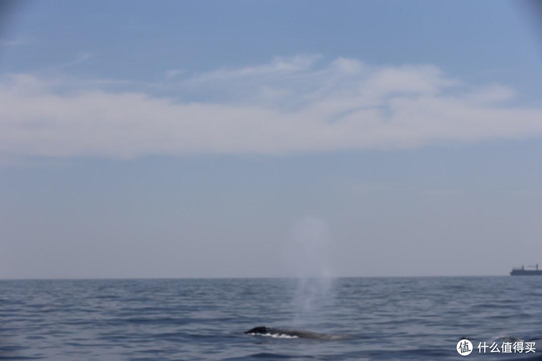 斯里兰卡鲸鱼喷水
