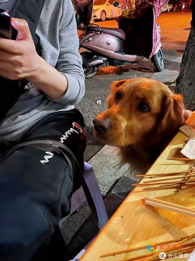 重庆小两口环游中国:抵达四川石棉,烧烤美味,金毛犬成功入住