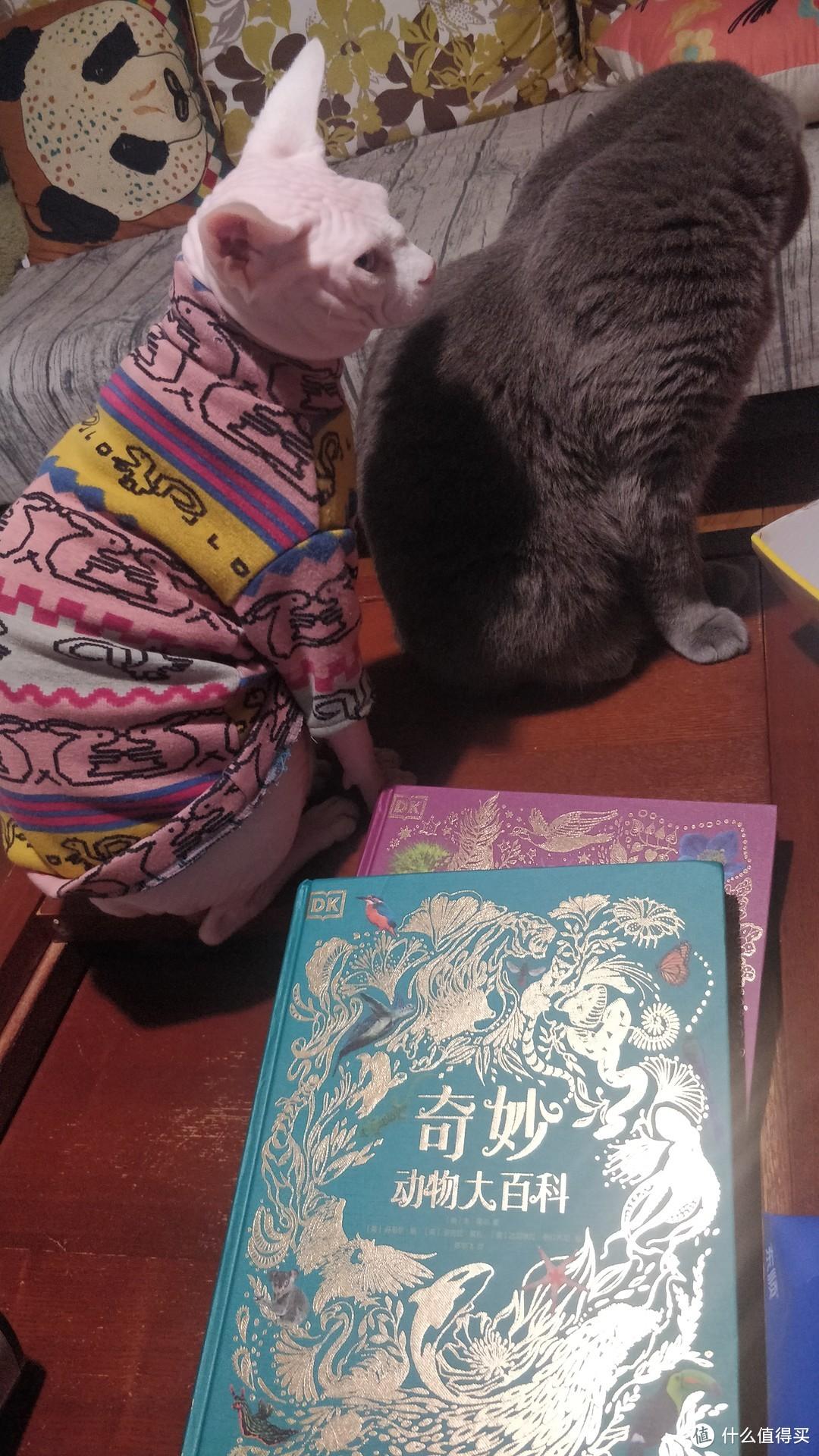 DK大自然百科全书--孩子们的科普学习宝典