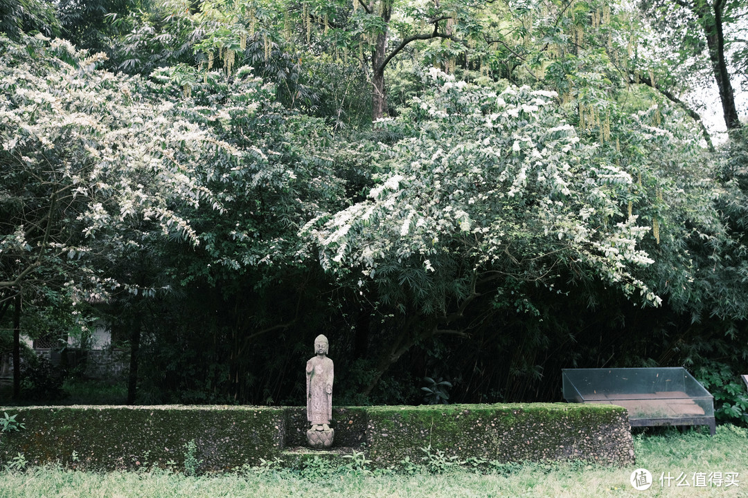 带着富士相机逛成都——鹿野苑石刻艺术博物馆