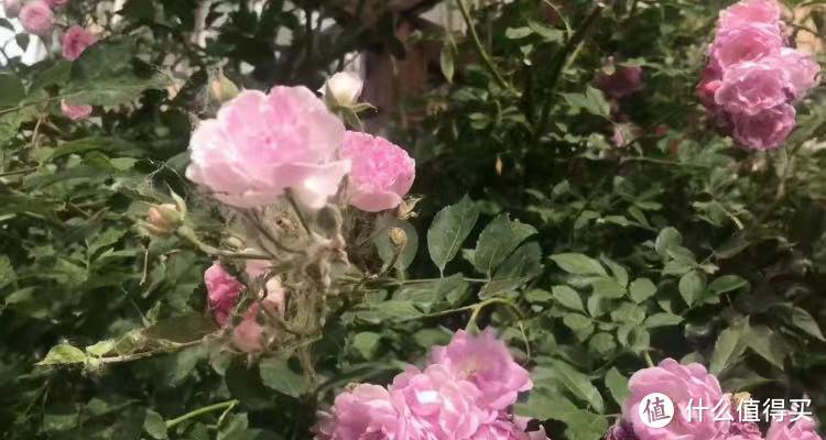 你和园艺大神之间,也许只差6个9.9包邮的神器,看了这篇让你花开满园