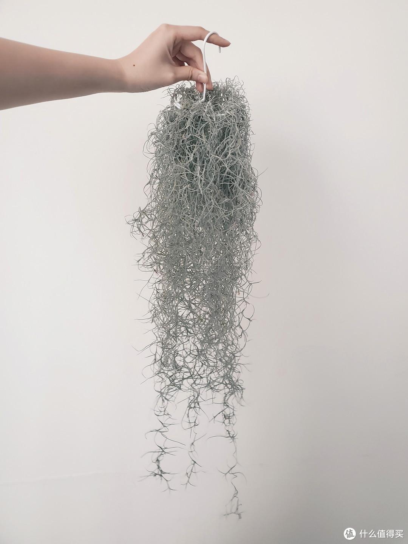 每日好店:想要养不死还便宜的植物吗?这家店里随便挑!