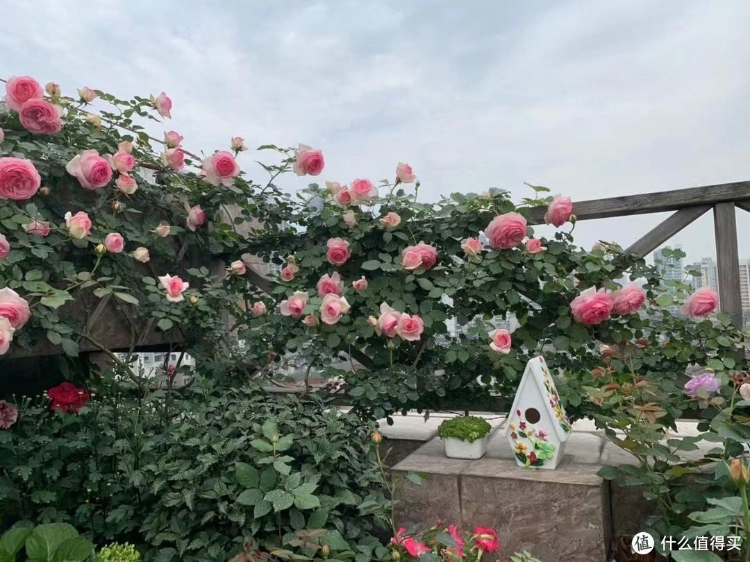 露台花园成型记(篇二)
