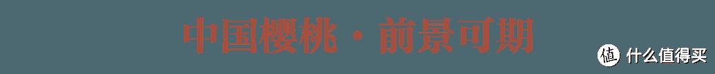 中国气象 · 樱桃风骨
