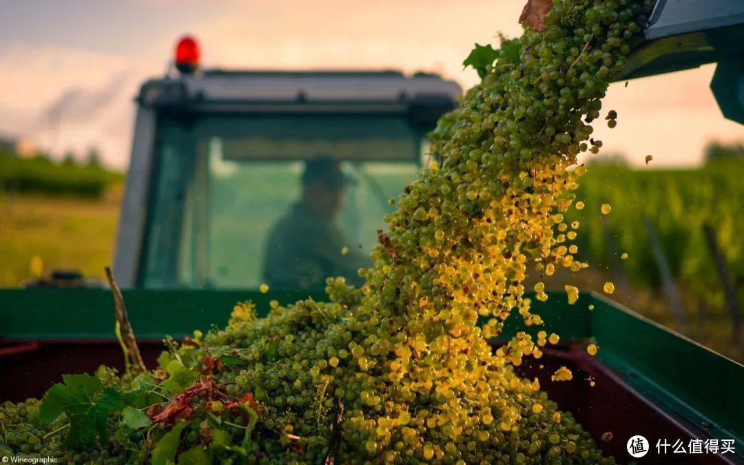 ▲ 2021年度葡萄酒摄影师比赛头等奖作品- A grape view