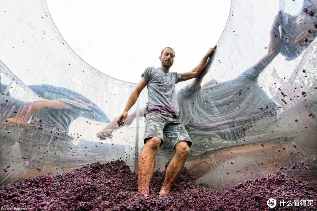 2021年度葡萄酒摄影师出炉,冠军作品长这样...