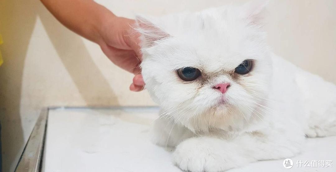铲屎官,准备领回你的宠物吧!盘点中国十大最受欢迎的猫狗CP