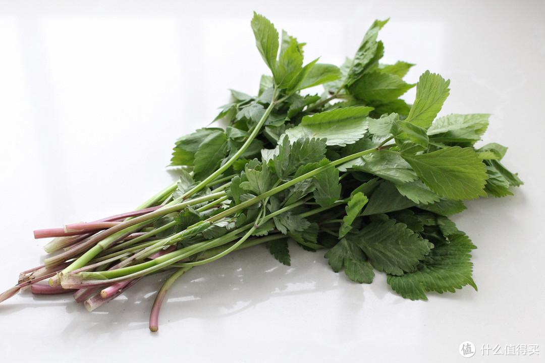 五月这野菜正是鲜嫩,拌馅蒸包子口感一绝,住在城里的轻易吃不到