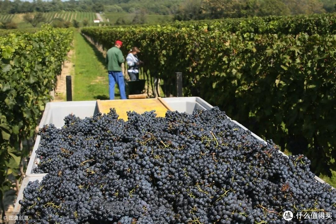 从零开始学红酒「第八课:葡萄农的一年与葡萄生长周期」