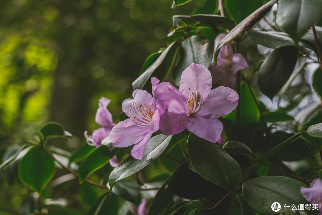 山里的野花