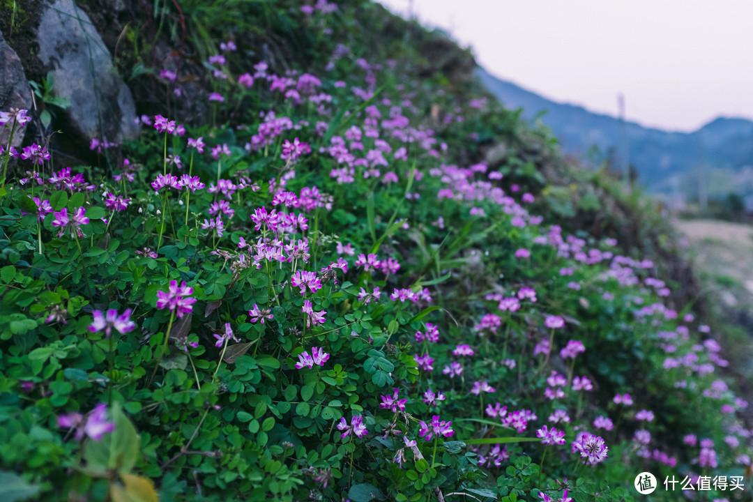 附近的野花