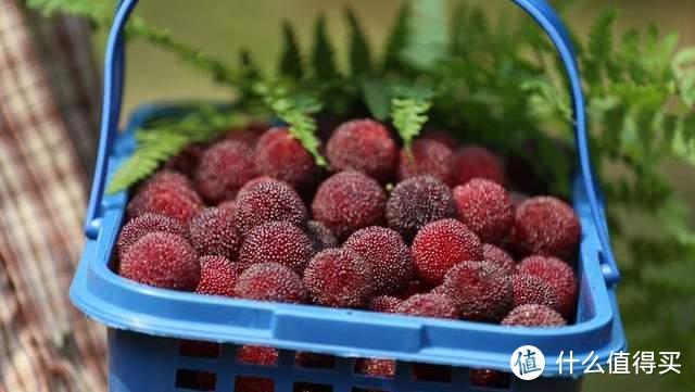 进入夏天后,这4种时令水果记得多吃,开胃解暑抗疲劳