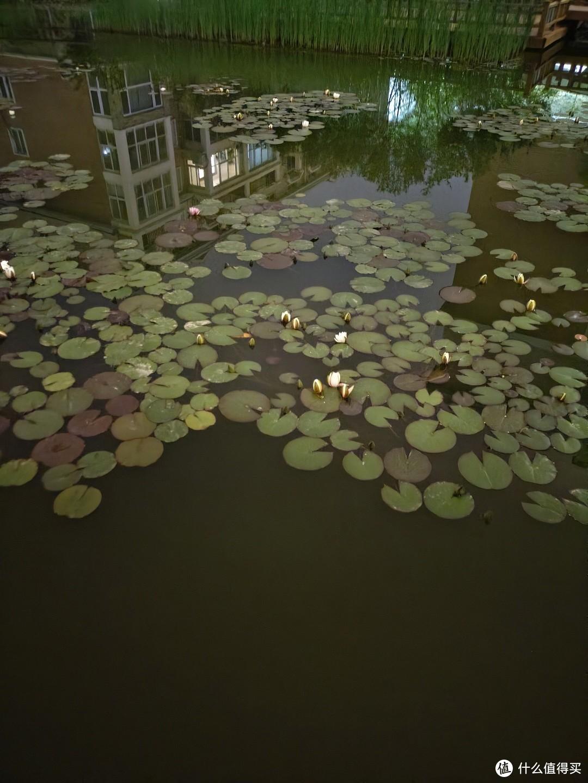 夜拍几乎无光照的池塘