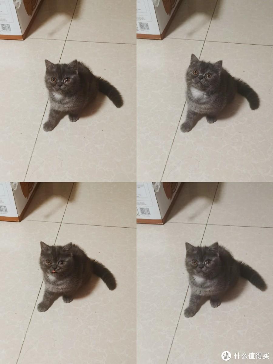 养猫新手必看|第一次带小奶猫回家要做哪些准备