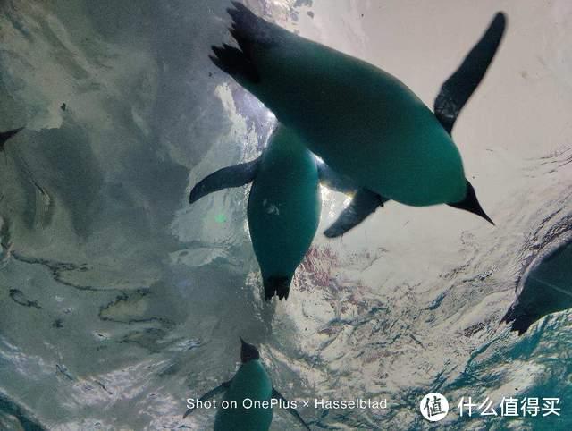 一加9拥有强大哈苏影像,以哈苏色彩记录珠海长隆海洋王国的故事