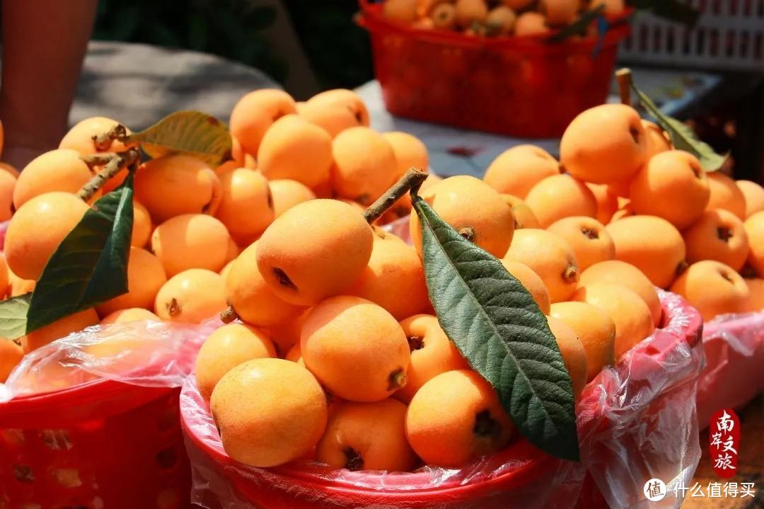 重庆枇杷采摘攻略:年产量超过400万斤,8元一斤吃到饱