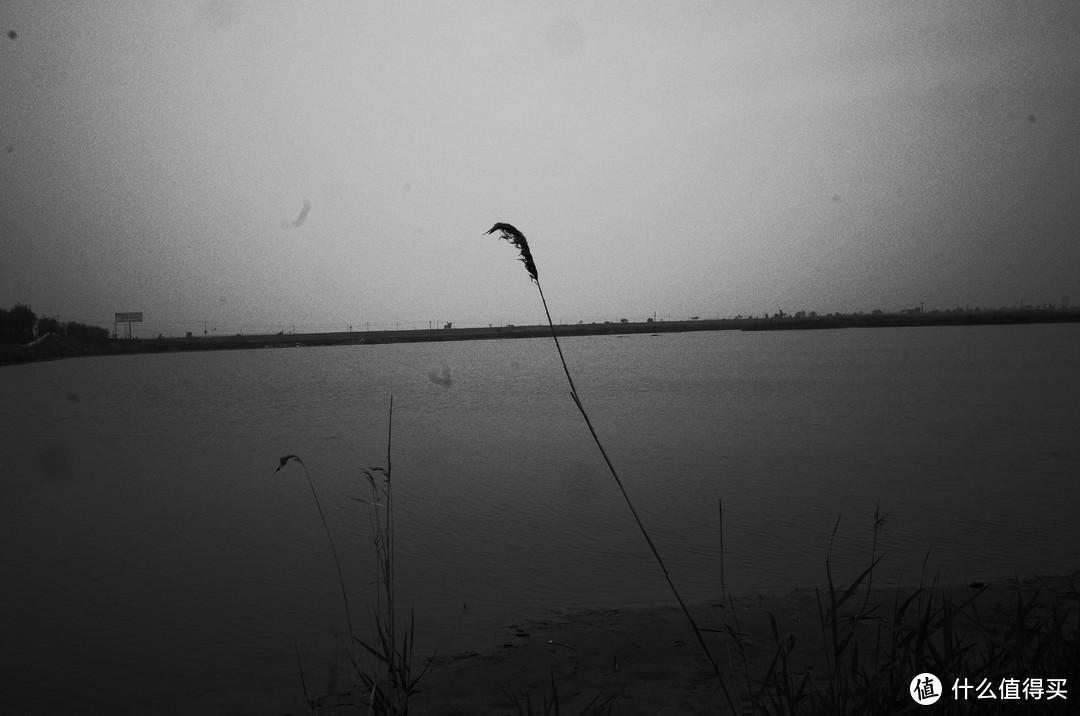 很喜欢这一张,一根芦苇飘在空中。