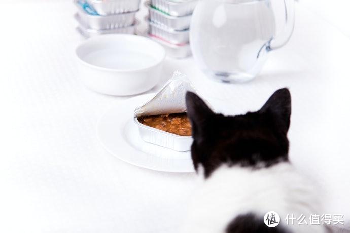 猫罐头的选购指南和推荐