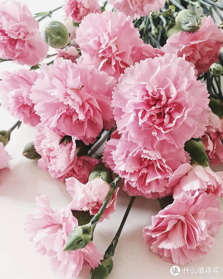 节日送花的宠儿,少不了一朵康乃馨