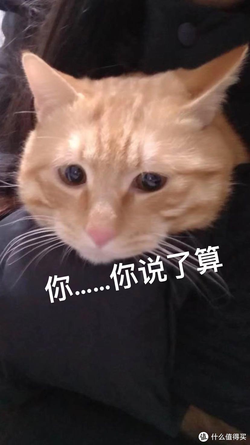 晒猫和交流~养猫必备技能:选猫砂