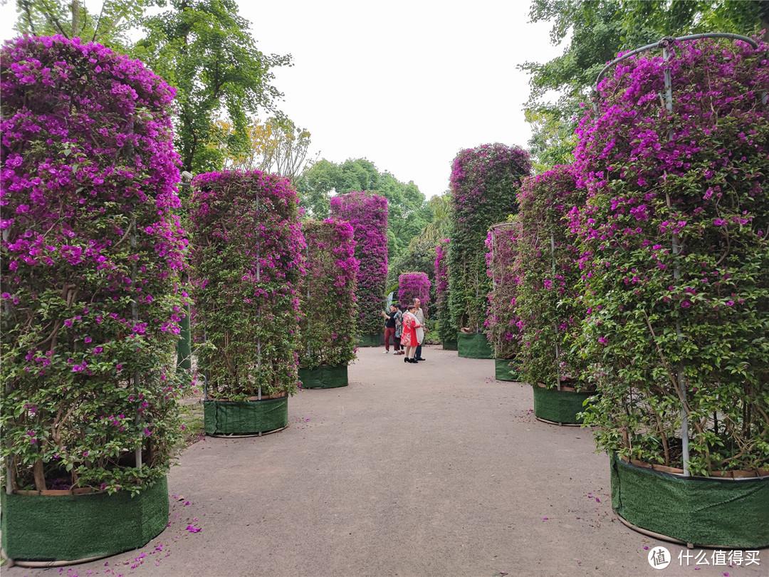 重庆熊婆婆的花园,门票38元,比南山植物园还贵,凭什么?