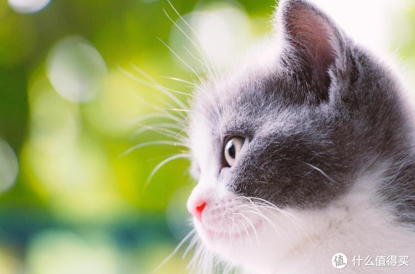 养小奶猫太治愈啦!幼猫猫粮推荐在这里!