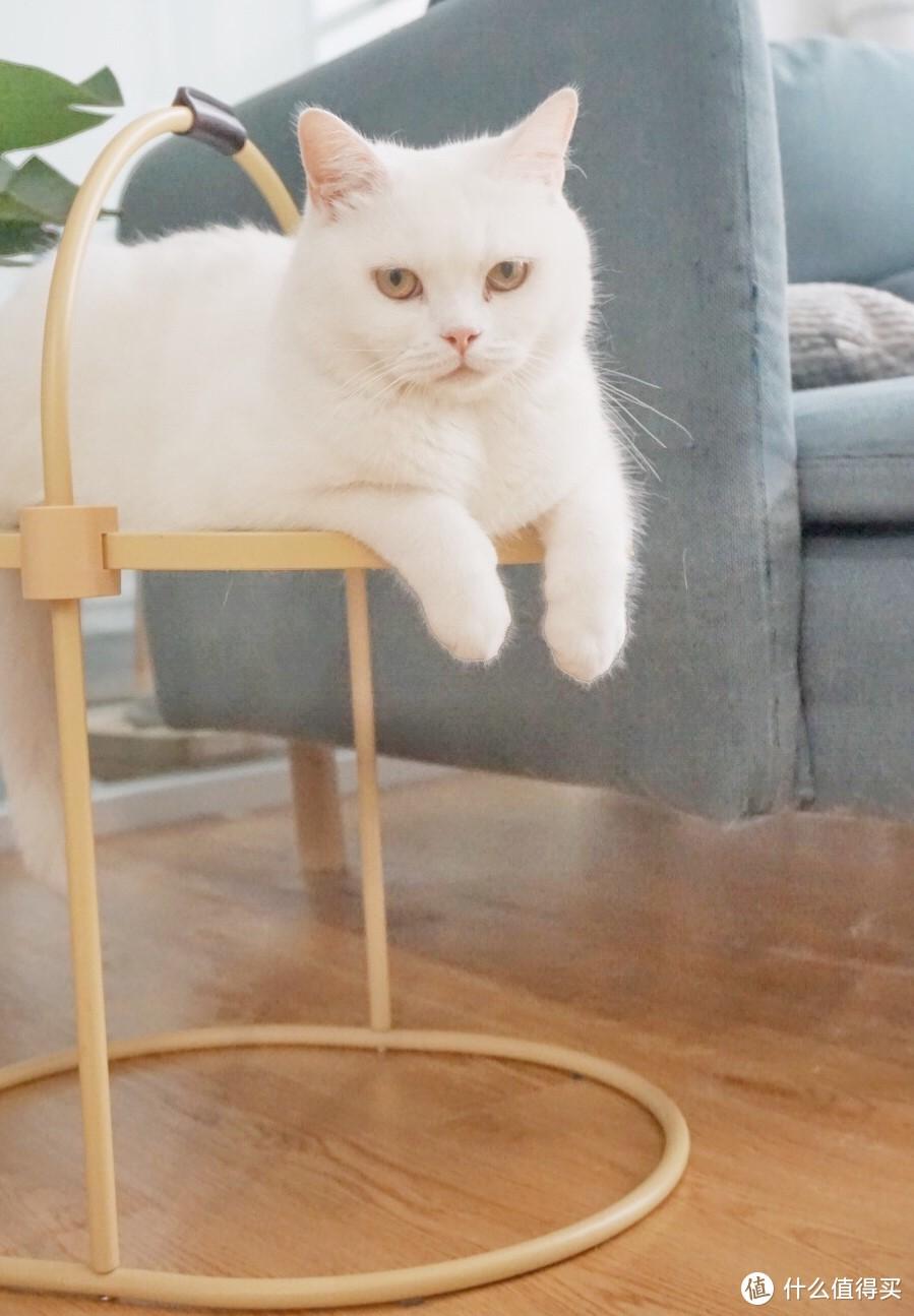 【麻薯苏打猫抓板测评】横竖可抓+超高颜值,还能当茶几的猫抓板真的存在?