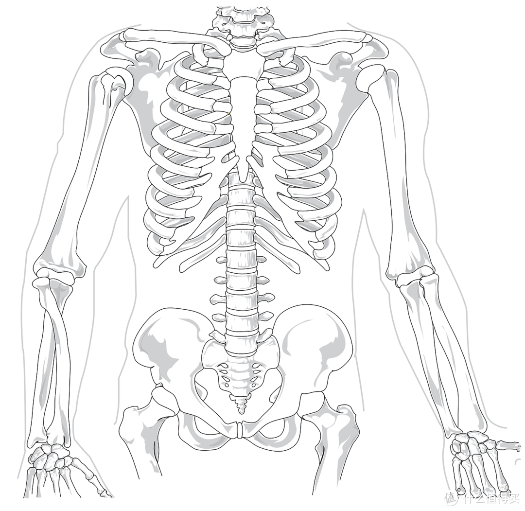 """人体器官也有""""保质期"""",你过期了吗?送你一份人体""""保养手册"""""""